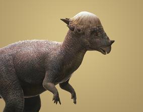 3D asset Pachycephalosaurus with Animation