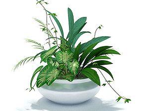 3D model Green House Plant