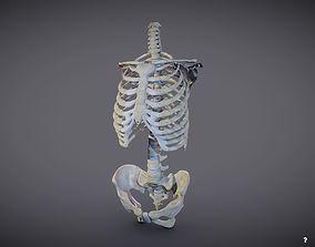 Torso skeleton 3D model VR / AR ready