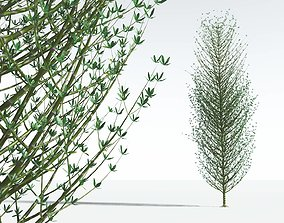 EVERYPlant Twisted Horsetail Tree 01 --12 Models--