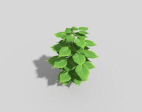nature Plant 3D asset realtime