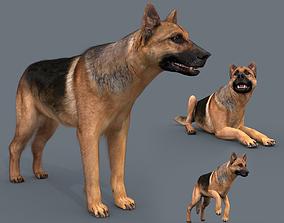 My Dog - 3d animated dog model animated