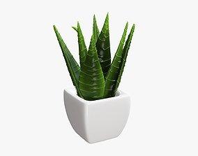 3D model Potted plant decorative 05
