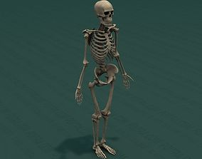 3D Human Skeleton - Adult Male - 6 ft tall - Complete
