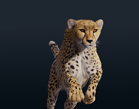 Cheetah Animated Fur 3D
