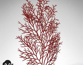 XfrogPlants Red Sea Fan 3D