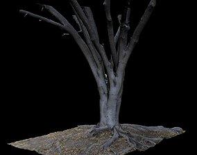 Ficus 3D