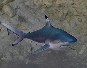 3D model Spottail shark animated