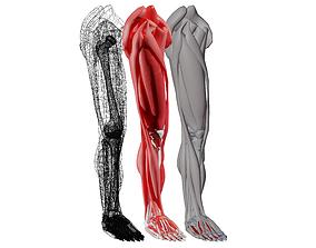 leg anatomy 3D