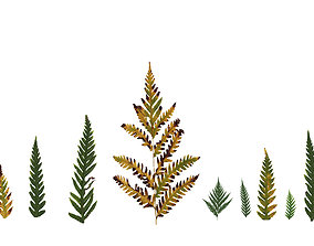 Giant Chain Fern Texture Pack - 24 Textures 3D