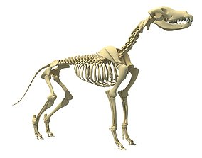 3D model Realistic Dog Skeleton