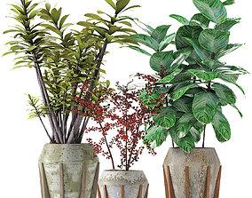3D model Collections Plants 02 pot-plant