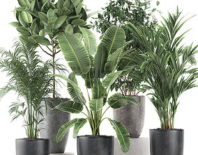 Decorative plants for the interior in flowerpots 610 3D