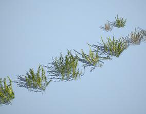 Vegetation Pack 03 3D asset VR / AR ready
