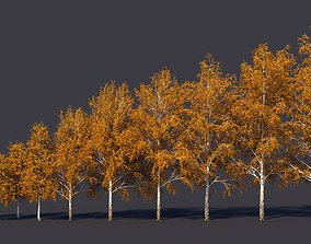 Autumn and summer birches 3D