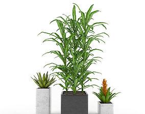 Tropics flowers - Set 1 3D model