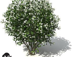 3D XfrogPlants Orange Jasmine