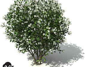 XfrogPlants Orange Jasmine 3D