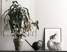 Plant with Watering Can and Shell Pot 3D