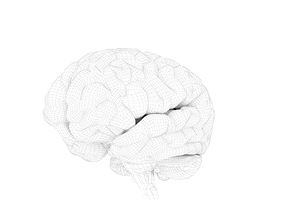 high quality and realistic 3D human brain