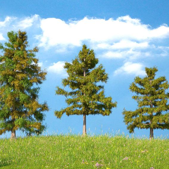 Cedar Tree 3d Model Collection