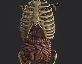 3D model Anatomy skeleton pelvis spinal column ribs and 1