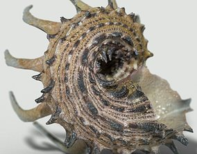 Angaria Delphinus Melanacantha 3D model