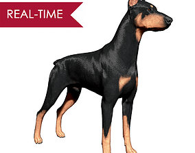 3D model Doberman Real-Time