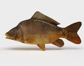 3D Mirror Carp Fish Cyprinus Carpio