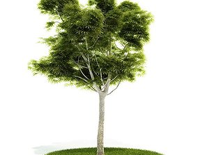 3D model tree Mature Tree With All Leaves