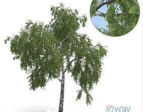 3D Birch Tree No 2 Summer Version