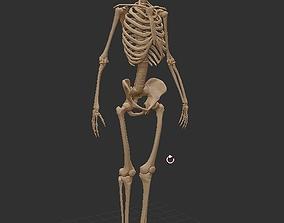 3D model Skelet