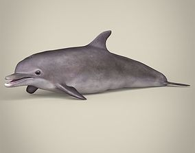 Low Poly Realistic Dolphin 3D asset