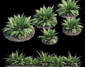 Fern bush 3D