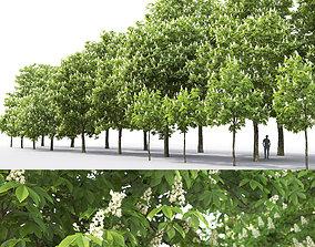 3D model Chestnut-tree Pack 01