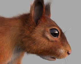 3D squirrel