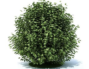 3D Green Leaf Shrub