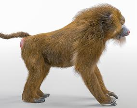 Baboon Monkey 3D