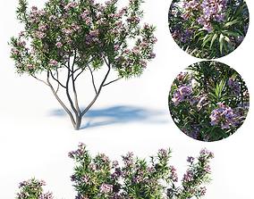 Pink Dawn Tree - Chitalpa Tashkentensis 3D model