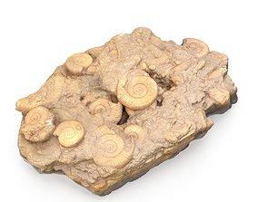 3D model Fossils Rock