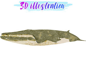 Low poly Fin Whale Illustration Animated - Game 3D asset