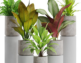 3D model Plants collection 556
