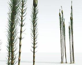 EVERYPlant Suckows Horsetail Tree 01 --16 Models-- 3D