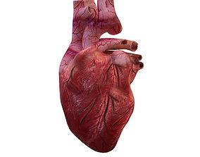 Human Heart 3D character