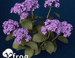 XfrogPlants Hortensia 3D