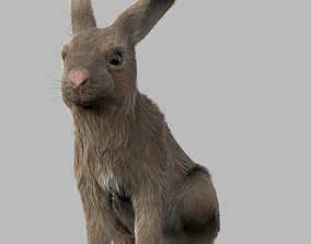 3D model rigged rabbit