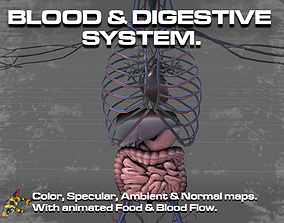 Circulatory and Digestive System 3D