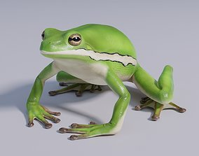 American Green Tree Frog - Animated 3D model