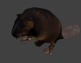 Beaver 3D asset