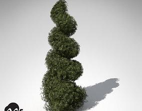 XfrogPlants False Cypress Bushes 3D
